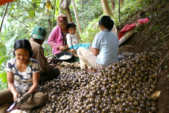 Palm Sugar 07