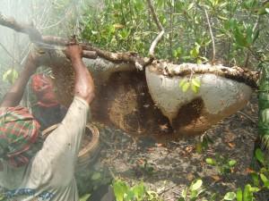 天然蜂蜜収集4