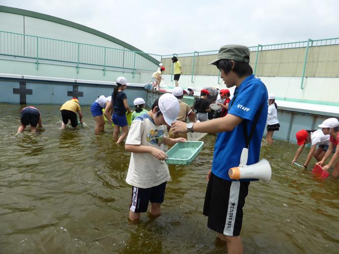 ヤゴ救出作戦 出前授業として約20校にて、プール開きの前にトンボの赤ちゃん(ヤゴ)を救出。