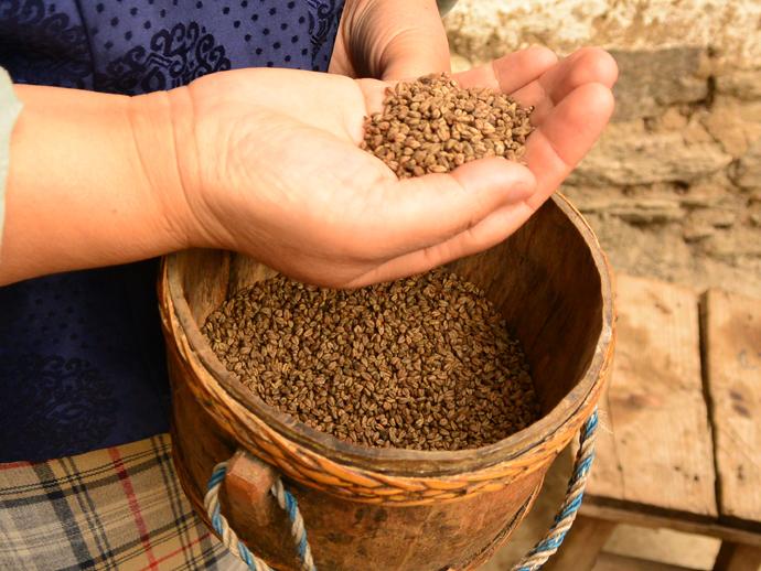 品種が混ざり、粒が小さいブータンのそば