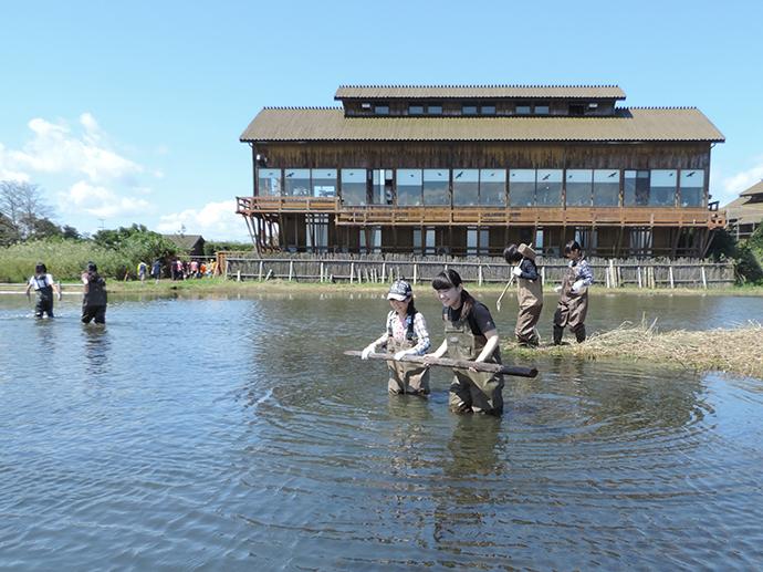 水鳥のために杭を立てるジュニアレンジャークラブ