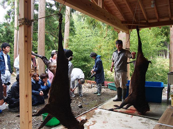 狩猟体験~解体体験 猟犬を用いた巻き狩りに同行し、銃猟で捕獲した鹿を解体する。通年で30組近い参加者があり、参加層も学生から40代男女までさまざま。