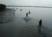 Prawn fishery in mangrove forest
